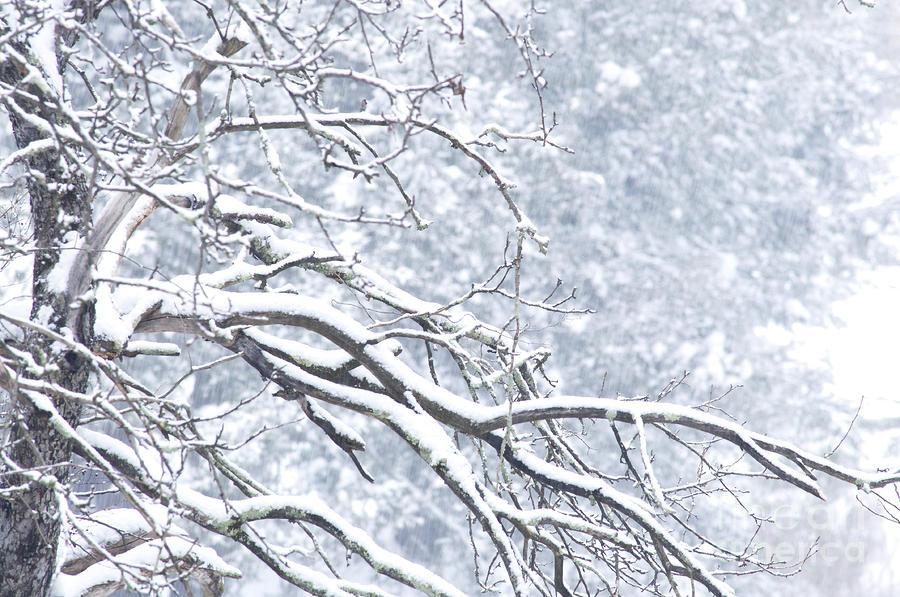Aktualizováno: Na Šumavu dorazil první letošní sníh